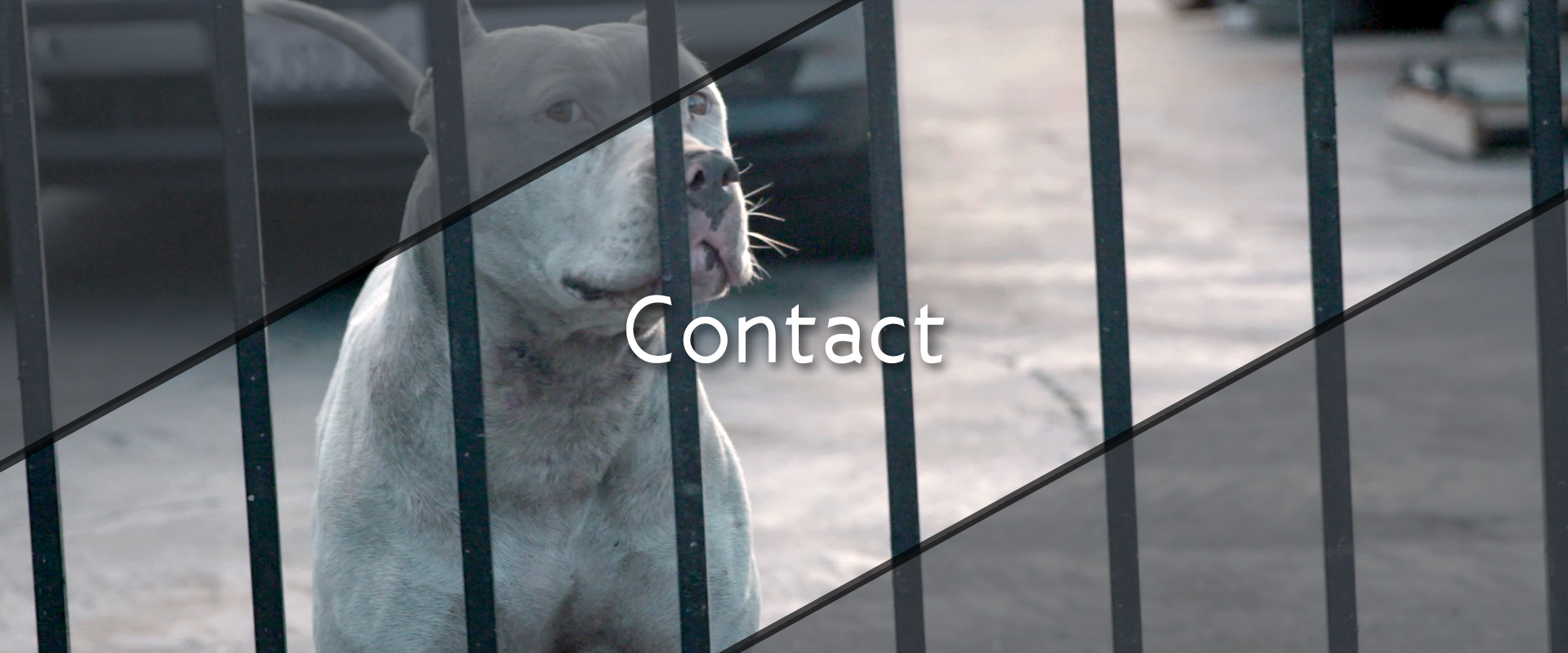 Contact 2016